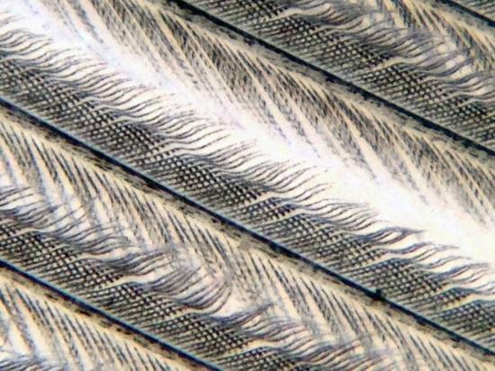 11c_feather