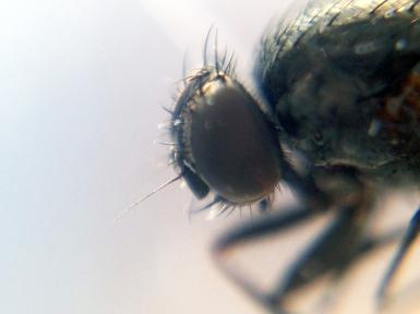 2a_fly1