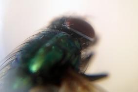 7c_fly2